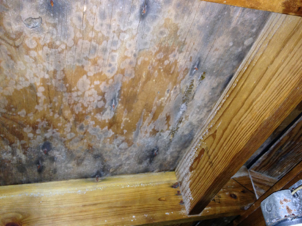 Significant amount of mold was discovered in this attic